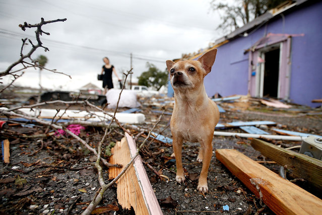 A dog stands in the left behind by a tornadon on February 7, 2017 in New Orleans, Louisiana. (Photo by Sean Gardner/Getty Images)