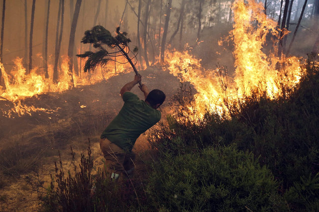 A man fights a forest fire at Sarzedo, Arganil, Portugal, 25 June 2015. 210 firemen, 59 land vehicules and 5 aircrafts were involved in tackling this forest fire. (Photo by Paulo Novais/EPA)