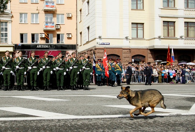A dog runs past members of the self-proclaimed Donetsk People's Republic forces standing in formation during the Victory Day parade, marking the 71st anniversary of the victory over Nazi Germany in World War Two, in Donetsk, Ukraine, May 9, 2016. (Photo by Alexander Ermochenko/Reuters)