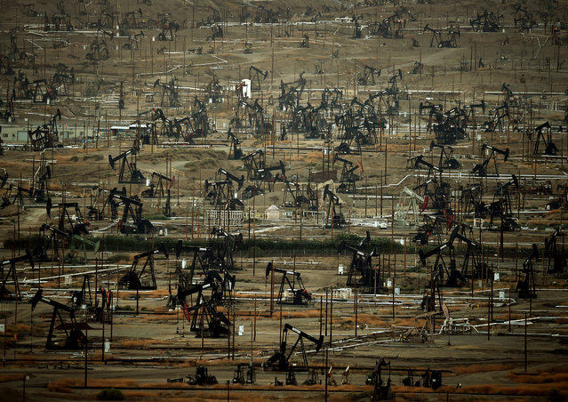 A general view shows oil pumping jacks and drilling pads at the Kern River Oil Field where the principle operator is the Chevron Corporation in Bakersfield, California on July 28, 2015. The field is the third largest in California, fifth largest in the United States and relies mainly on the steam injection method to extract the crude oil. (Photo by Mark Ralston/AFP Photo)