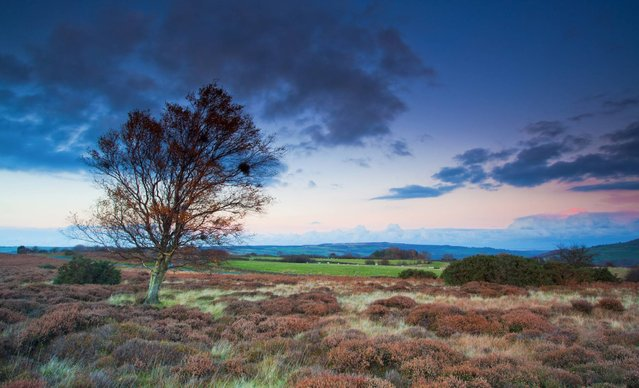 North York Moors National Park. Famous for its spectacular purple heather moorland and beautiful heritage coast, North York Moors National Park is also home to an array of wildlife including red squirrels and badgers. (Photo by Mike Nicholas/NYMNPA)