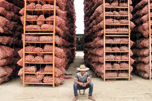 A man sits in front of tall stacks of garlic at a market in Jinxiang county, in eastern Shandong province June 1, 2016. (Photo by Jessica Macy Yu/Reuters)
