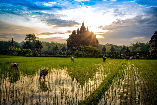 """""""Sunrise Plaosan Temple"""". While in Indonesia shooting TV commercial one of our locations was this temple. Sun rose as the people worked in rice paddies. Photo location: Plaosan Temple, Yogyakarta, Indonesia. (Photo and caption by Bill Stipp/National Geographic Photo Contest)"""