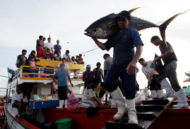 Fishermen and their families watch as a worker carries a yellow fin tuna off a fishing boat at fish at a port in General Santos City, Mindanao, southern Philippines January 10, 2008. (Photo by Darren Whiteside/Reuters)