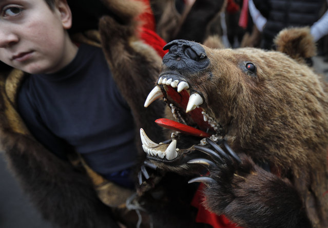In this Saturday, December 30, 2017 picture children wearing a bear fur costumes pause during an annual bear parade in Comanesti, Romania. (Photo by Vadim Ghirda/AP Photo)