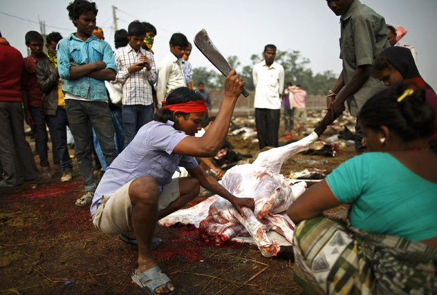 "A man cuts the meat of a sacrificed buffalo a day after the sacrificial ceremony of the ""Gadhimai Mela"" festival held in Bariyapur November 29, 2014. (Photo by Navesh Chitrakar/Reuters)"