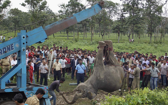 A crane removes the carcass of a female elephant near a railway track at Banarhat village, in the eastern Indian state of West Bengal, on May 30, 2013. Two adult female elephants and one calf died on Thursday after they were hit by a passenger train while crossing a railway track, forest officials said. (Photo by Reuters/Stringer)
