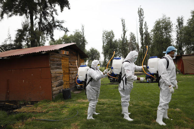 Workers assist each other to holster their sprayers after applying a disinfectant solution on a chinampa, one of the traditional agricultural islands in the Xochimilco district of Mexico City, during a media tour of the borough's sanitation efforts against the new coronavirus, Thursday, May 7, 2020. Health authorities concede that the real number of COVID-19 infections in the densely populated capital is many times higher than the official count, and authorities and experts agree that the worst is yet to come. (Photo by Rebecca Blackwell/AP Photo)