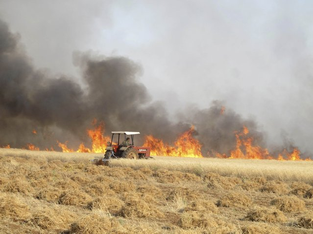 A man attempts to harvest wheat from a field on fire, which activists said was caused by shelling carried out by forces loyal to the Syrian regime, in Ma'arat Masrein, north of Idlib June 6, 2013. (Photo by Abdalghne Karoof/Reuters)