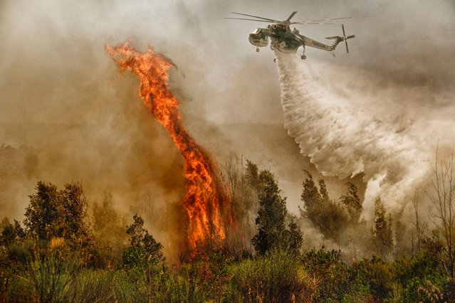 On target: Brave pilots are on a course straight into these enormous flames as they release tonnes of water onto the fire. (Photo by Antonio Grambone/Caters News Agency Ltd)