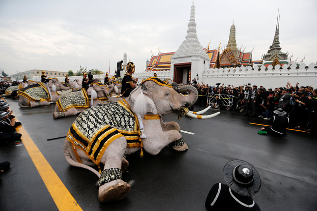 Ayuthaya elephants and mahouts pay their respects at the Royal Palace where Thailand's late king Bhumibol Adulyadej is lying in state, November 8, 2016. (Photo by Jorge Silva/Reuters)