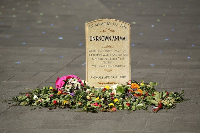 """A tombstone is seen at Federation Square on October 1, 2013 in Melbourne, Australia. Over 200 activists gathered with the bodies of deceased animals to publicly grieve their deaths. Animal Liberation Victoria is against the treatment of animals as """"property"""" an promotes a vegan lifestyle. (Photo by Graham Denholm/Getty Images)"""
