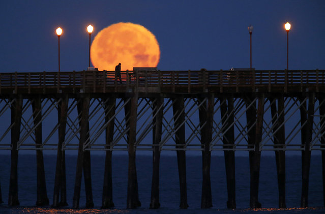 The moon sets in the early morning hours as a man walks along an ocean pier in Oceanside, California March 5, 2015. (Photo by Mike Blake/Reuters)
