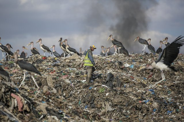 """A man who scavenges recyclable materials for a living, center, walks past Marabou storks feeding on a mountain of garage amidst smoke from burning trash at Dandora, the largest garbage dump in the capital Nairobi, Kenya Tuesday, September 7, 2021. Tuesday marks the second """"International Day of Clean Air for blue skies"""" aimed at rallying countries to recognise and combat the environmental risk to human health posed by air pollution, according to the United Nations. (Photo by Brian Inganga/AP Photo)"""