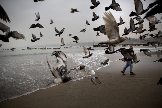 In this May 13, 2015 photo, Fabian Espinel feeds pigeons on Fishermen's Beach in Lima, Peru. Espinel, who's been going to the beach every morning at 5:30am for that past 10 years, says he uses the sea to help treat gout. The 65-year-old says the sea is essential, heals and gives strength. (Photo by Rodrigo Abd/AP Photo)