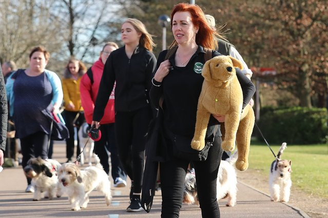 "Dogs and owners arrive for the first day of Crufts Dog Show at NEC Arena on March 09, 2017 in Birmingham, England. First held in 1891, Crufts is said to be the largest show of its kind in the world, the annual four-day event, features thousands of dogs, with competitors travelling from countries across the globe to take part and vie for the coveted title of ""Best in Show"". (Photo by Matt Cardy/Getty Images)"
