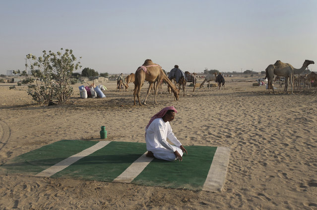 In this January 30, 2017 photo, a Sudanese camel keeper, performs his afternoon prayers at a farm for female racing camels, in Dubai, United Arab Emirates. (Photo by Kamran Jebreili/AP Photo)