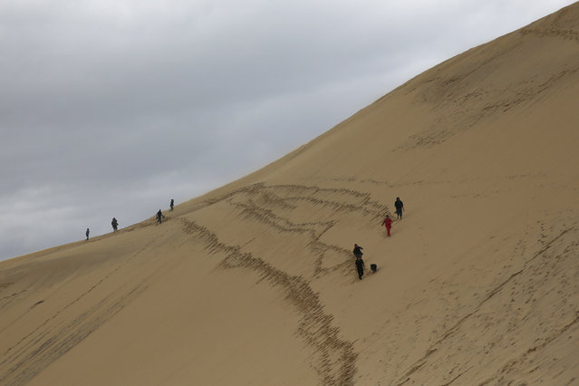 People walk along the Dune du Pilat (Dune of Pilat), the tallest sand dune in Europe, in La Teste de Buch, near Bordeaux, France, June 15, 2016. The dune has a volume of about 60,000,000 m³, measuring around 500 m wide from east to west and 2.7 km in length from north to south. Its height is currently 110 meters above sea level. The dune is a famous tourist destination with more than one million visitors per year. (Photo by Sergio Perez/Reuters)