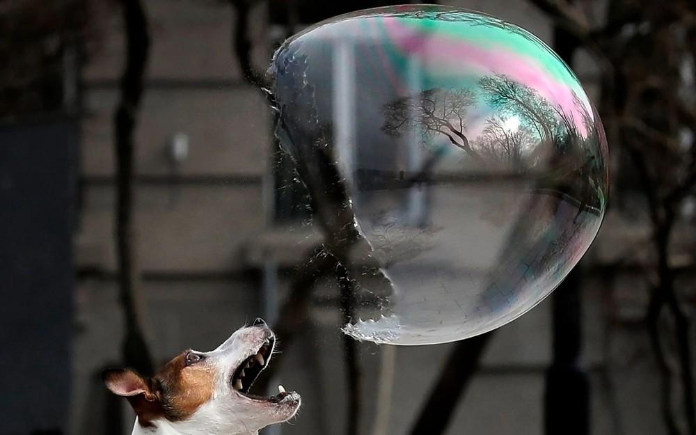 Some Photos: Soap Bubbles