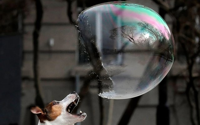 A dog plays with a giant soap bubble in downtown Kiev, Ukraine, 06 March 2020. (Photo by Sergey Dolzhenko/EPA/EFE)