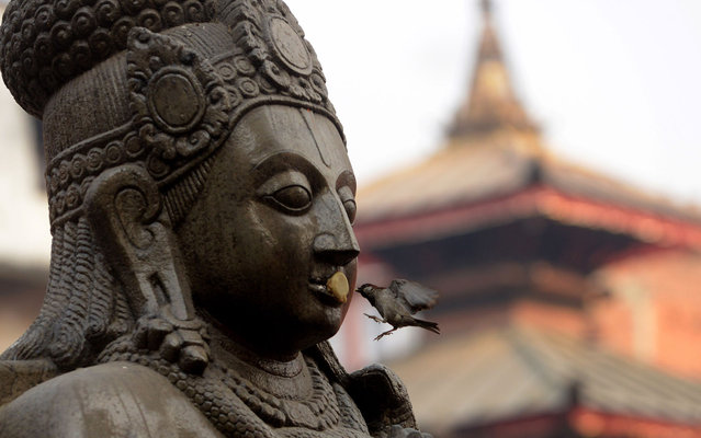 A bird picks food from the statue of the Hindu god Garuda at Basantapur Durbar square in Kathmandu on March 20, 2013. The Durbar Square holds the palaces of the Malla and Shah kings who ruled over the city, is located in the centre of the capital and is listed as a UNESCO world heritage site. (Photo by Prakash Mathema/AFP Photo)