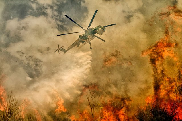 Engulfed in flames, it's difficult for the pilots to see where they are flying as they struggle to bring the fire under control. (Photo by Antonio Grambone/Caters News Agency Ltd)