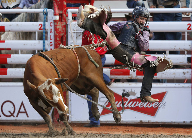 Ryder Wright gets thrown off a steer in the junior steer riding event during the 101st Calgary Stampede rodeo in Calgary, Alberta, July 7, 2013. (Photo by Todd Korol/Reuters)