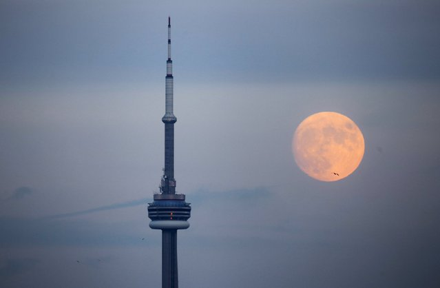 The moon rises behind the CN Tower, a Canadian landmark, in Toronto, Canada November 24, 2015. (Photo by Mark Blinch/Reuters)