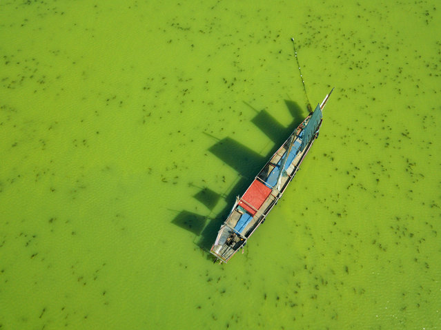 Aerial view of a boat working in the green water of Taihu Lake covered by blue-green algae, Wuxi city, Jiangsu province, China on May 23, 2018. (Photo by Imaginechina/Rex Features/Shutterstock)