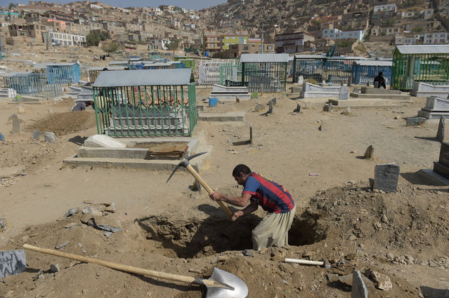 An Afghan man digs a grave for a victim in Kabul on October 12, 2016, who was killed in an attack by gunmen inside the Karte Sakhi shrine late on October 11 Grieving worshippers on October 12 described desperately trying to shelter their children against a hail of gunfire in Kabul that killed at least 18 people gathering to mark Ashura, one of the most important festivals of the Shiite calendar. (Photo by Shah Marai/AFP Photo)