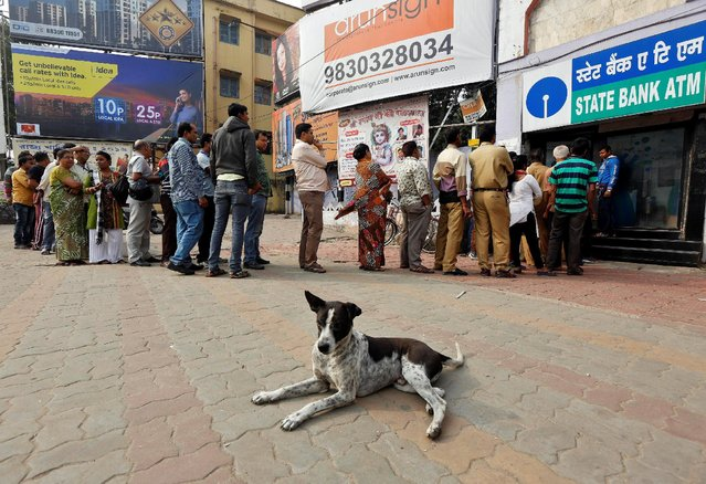 A stray dog rests as people queue outside an ATM to withdraw cash in Kolkata, India, December 4, 2016. (Photo by Rupak De Chowdhuri/Reuters)