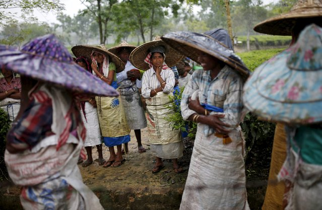 Tea garden workers wearing jappi hats made out of bamboo and palm leaves wait for the rain to stop to resume their work inside Aideobarie Tea Estate in Jorhat in Assam, India, April 21, 2015. (Photo by Ahmad Masood/Reuters)