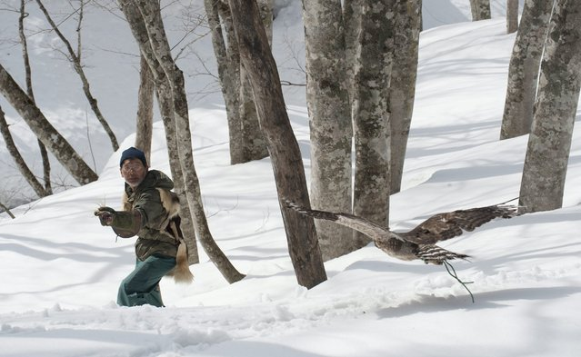 Japan's last living traditional falconer, Hidetoshi Matsubara holds out a piece of meat as he calls his Bear Hawk in the mountains above Tendo city, Yamagata prefecture, Japan, 16 March 2016. Matsubara has been hunting as a professional falconer for more than forty years. Falconry reportedly was first introduced to Japan in the fourth century from Korea. (Photo by Everett Kennedy Brown/EPA)