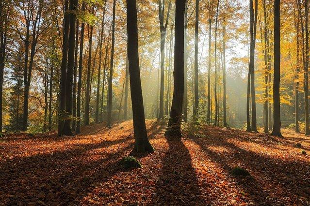 """Morning forest light""; Miastko, Poland. (Photo by Mateusz Liberra/PA Wire)"