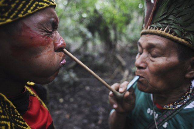 A spiritual leader (R) of the Huni Kui Indian tribe blows an herbal powder into the nose of a tribal member during a ceremony outside the village of Novo Segredo along the Envira river of Brazil's northwestern Acre state, March 9, 2014. (Photo by Lunae Parracho/Reuters)