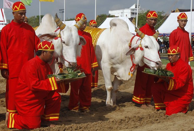 Thai officials dressed in traditional costumes feed oxen during the annual Royal Ploughing Ceremony in central Bangkok, on May 9, 2014. The ancient ploughing ceremony in Buddhist Thailand, overseen by Crown Prince Maha Vajiralongkorn, marks the end of the dry season and is meant to herald an auspicious start for the rice-planting season. (Photo by Chaiwat Subprasom/Reuters)