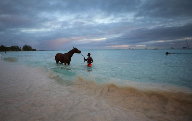 A stable boy from the Garrison Savannah racecourse washes his horse in the sea at Pebbles Beach near Bridgetown, Barbados, March 22, 2019. (Photo by Phil Noble/Reuters)