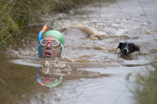 Angela Jones swims with her dog Jack during the World Bog Snorkelling Championships 2017 on August 27, 2017 in Llanwrtyd Wells, Wales. (Photo by Matthew Horwood/Getty Images)