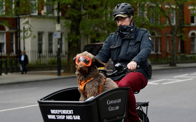 A man and a dog are seen on a bicycle in central London, following the outbreak of the coronavirus disease (COVID-19), London, Britain, May 4, 2020. (Photo by Toby Melville/Reuters)