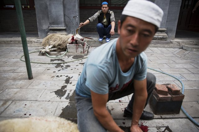 Muslims hold slaughtered animals at the courtyard of the Dongsi mosque after morning prayers on Eid al-Adha in Beijing, China September 24, 2015. (Photo by Damir Sagolj/Reuters)