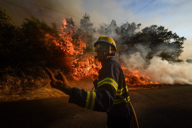 A firefighter reacts as a fire squad tries to extinguish a wildfire in the village of San Cristobal near Monterrey on July 29, 2020. (Photo by Miguel Riopa/AFP Photo)