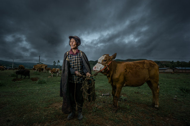 """""""Sichuan Shepherd"""". In some places in Sichuan province, Cattles and sheeps are only properities to lots of families. People and livestocks live in the same room, and potatoes are only food both for people and livestocks. Photo location: China. (Photo and caption by William Mok/National Geographic Photo Contest)"""