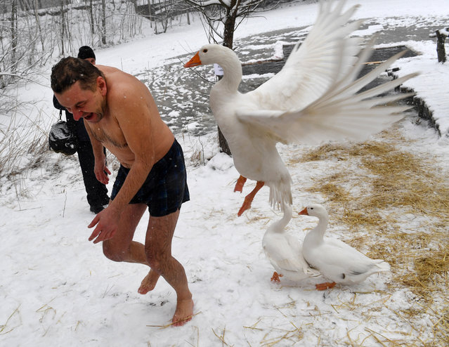 A goose attacks an Orthodox believer as he leaves the icy waters of a pond during the celebration of the Orthodox Epiphany holiday in Kiev on January 19, 2018. Thousands of Ukrainian Orthodox Church followers plunged into icy rivers and ponds across the country to mark Epiphany, cleansing themselves with water deemed holy for the day. (Photo by Sergei Supinsky/AFP Photo)