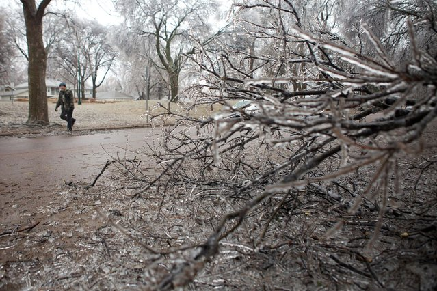 Ice coats a tree on Tuesday, April 9, 2013, in Sioux Falls, South Dakota, as a passerby tries to clear a fallen branch from the street. An early spring storm walloped South Dakota early Tuesday, bringing everything from rain, thunder and lightning to heavy snow and strong winds. (Photo by Amber Hunt/AP Photo)