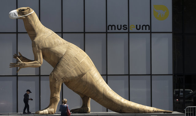 A boy walks by a model of a dinosaur wearing a face mask, during a partial lockdown to prevent the spread of the coronavirus, at the Museum of Natural History in Brussels, Tuesday, May 19, 2020. Museums are hesitantly starting to reopen as the coronavirus lockdown measures are relaxed, yet experts say that one in eight in the world could potentially face permanent closure because of the pandemic. (Photo by Virginia Mayo/AP Photo)