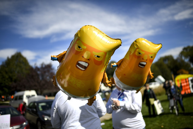 "Demonstrator's hold ""Baby Trump"" balloons as Anti-Trump protestors began to gather at Soldier's Field Veterans Memorial in Rochester, Minn., Thursday, October 4, 2018. (Photo by Aaron Lavinsky/Star Tribune via AP Photo)"