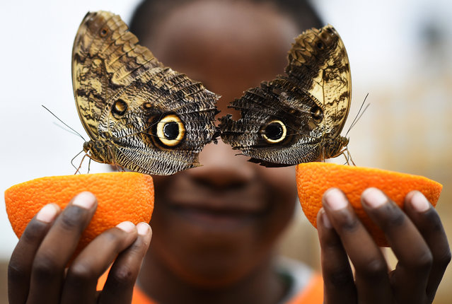Bjorn, aged 5, smiles as he poses with a Owl butterfly during an event to launch the Sensational Butterflies exhibition at the Natural History Museum in London, Britain. (Photo by Dylan Martinez/Reuters)