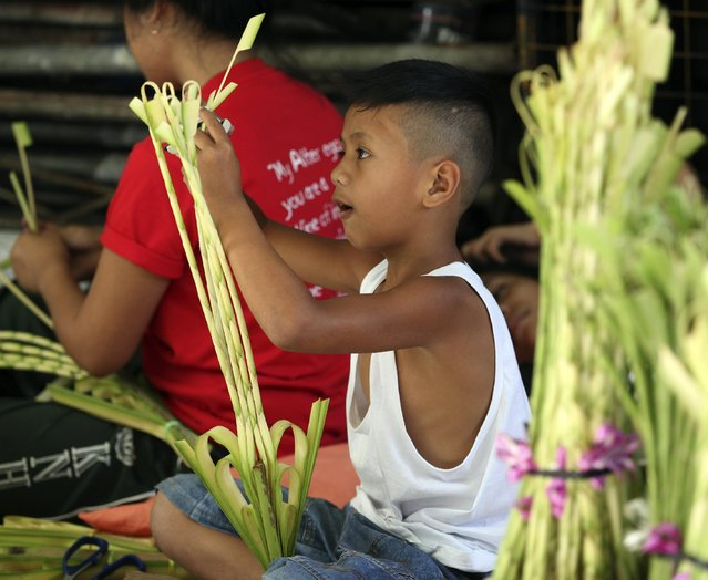 A boy crafts palm fronds to be blessed for Palm Sunday rites among Roman Catholics at suburban Paranaque city, south of Manila, Philippines Saturday, March 28, 2015. (Photo by Bullit Marquez/AP Photo)