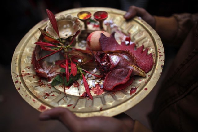 A Nepalese devotee holds a brass tray with the head of a chicken that was just sacrificed during Sindur Jatra festival in Thimi, outskirts of Kathmandu, Nepal, Wednesday, April 15, 2015. (Photo by Niranjan Shrestha/AP Photo)