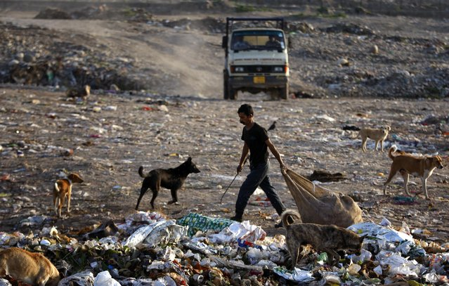 An Indian ragpicker looks for recyclable material from a garbage dump at a garbage dump yard on the outskirts of Jammu, India, Wednesday, April 22, 2015. (Photo by Channi Anand/AP Photo)